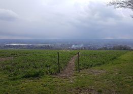 Dorking to Charing - Gallery Image 5